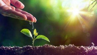 İnteqrir bitki mühafizəsi sisteminin tətbiqi genişləndirilir