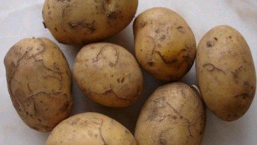 Kartof torpaq birəciyinin risk təhlili həyata keçirilib